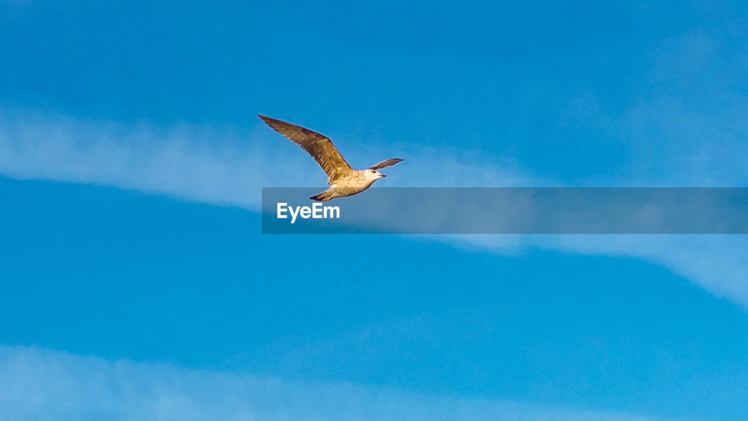 LOW ANGLE VIEW OF A BIRD FLYING IN SKY