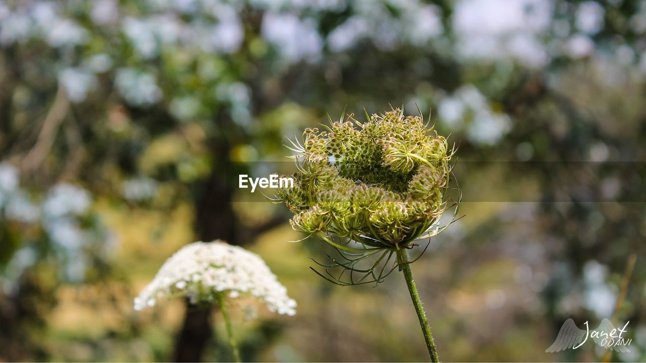 growth, nature, focus on foreground, day, plant, no people, outdoors, flower, close-up, green color, beauty in nature, fragility, freshness, flower head