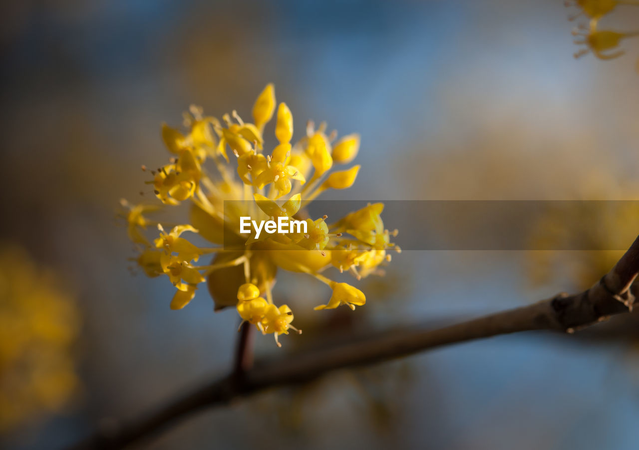 yellow, flower, flowering plant, plant, vulnerability, fragility, beauty in nature, freshness, growth, close-up, nature, focus on foreground, selective focus, petal, no people, flower head, day, inflorescence, outdoors, springtime, pollen