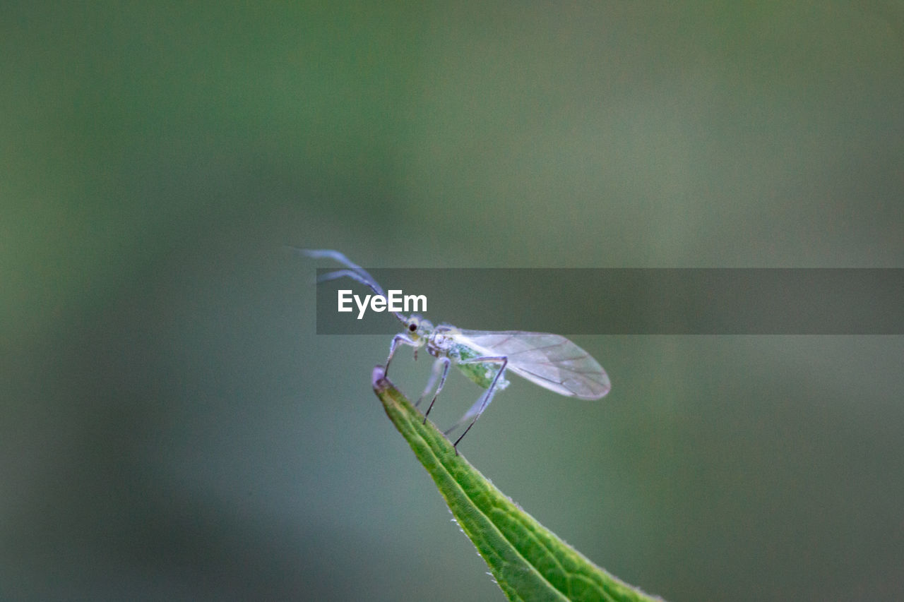 animals in the wild, animal wildlife, invertebrate, one animal, animal themes, insect, animal, close-up, plant, nature, beauty in nature, day, green color, no people, focus on foreground, animal wing, growth, fragility, outdoors, plant part