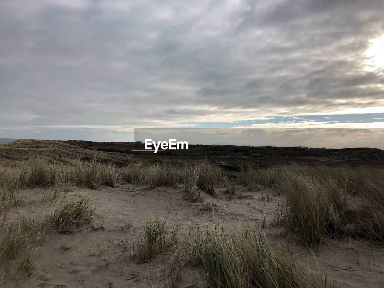 cloud - sky, sky, land, tranquility, environment, tranquil scene, plant, grass, landscape, beauty in nature, nature, scenics - nature, field, no people, non-urban scene, horizon, day, outdoors, horizon over land, marram grass
