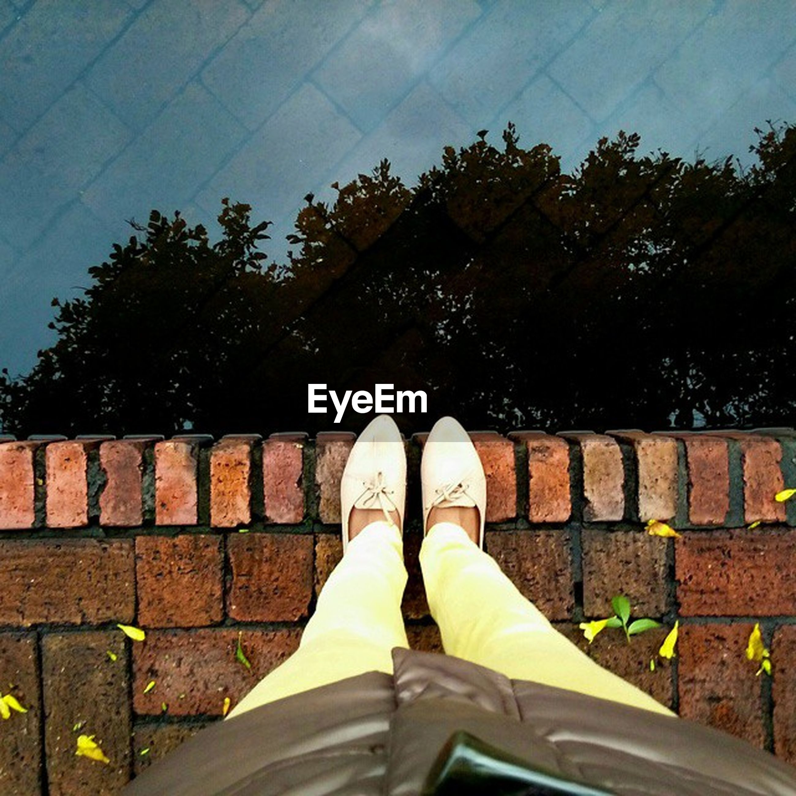 low section, shoe, person, personal perspective, tree, footwear, low angle view, day, outdoors, part of, sunlight, sky, growth, standing, men, unrecognizable person, human foot