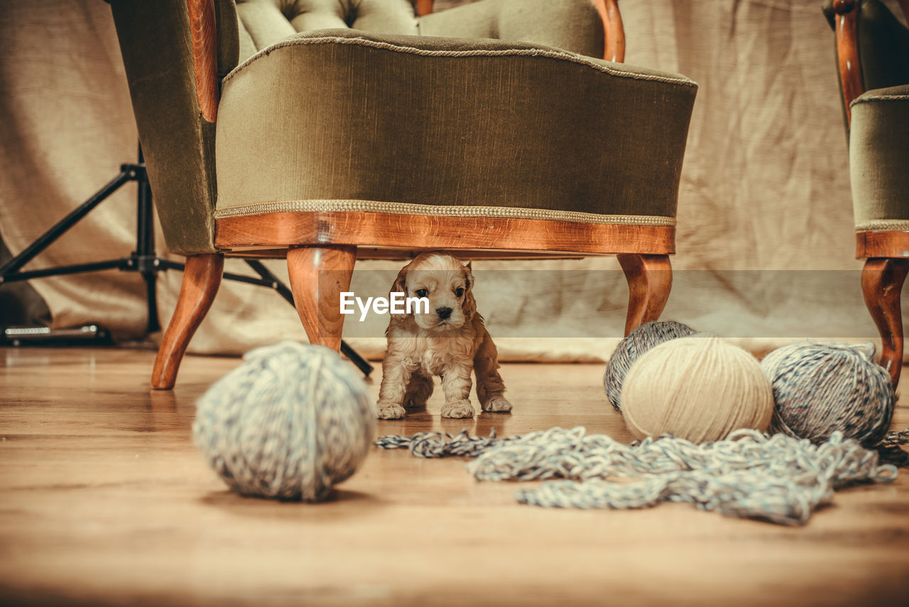 animal, indoors, pets, domestic animals, animal themes, domestic, mammal, canine, dog, one animal, selective focus, ball, wood - material, home interior, flooring, seat, no people, chair, brown, art and craft