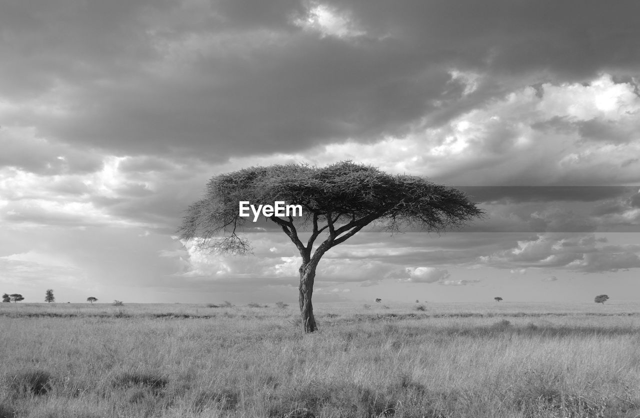Bare Tree On Grassy Field Against Cloudy Sky