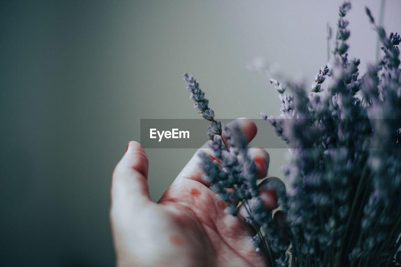 Holding lavender