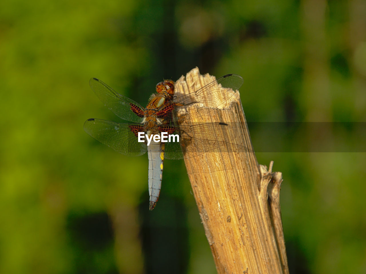 animal wildlife, animal, animals in the wild, animal themes, invertebrate, focus on foreground, one animal, insect, close-up, day, green color, no people, nature, plant, dragonfly, animal wing, outdoors, wood - material, grasshopper, zoology