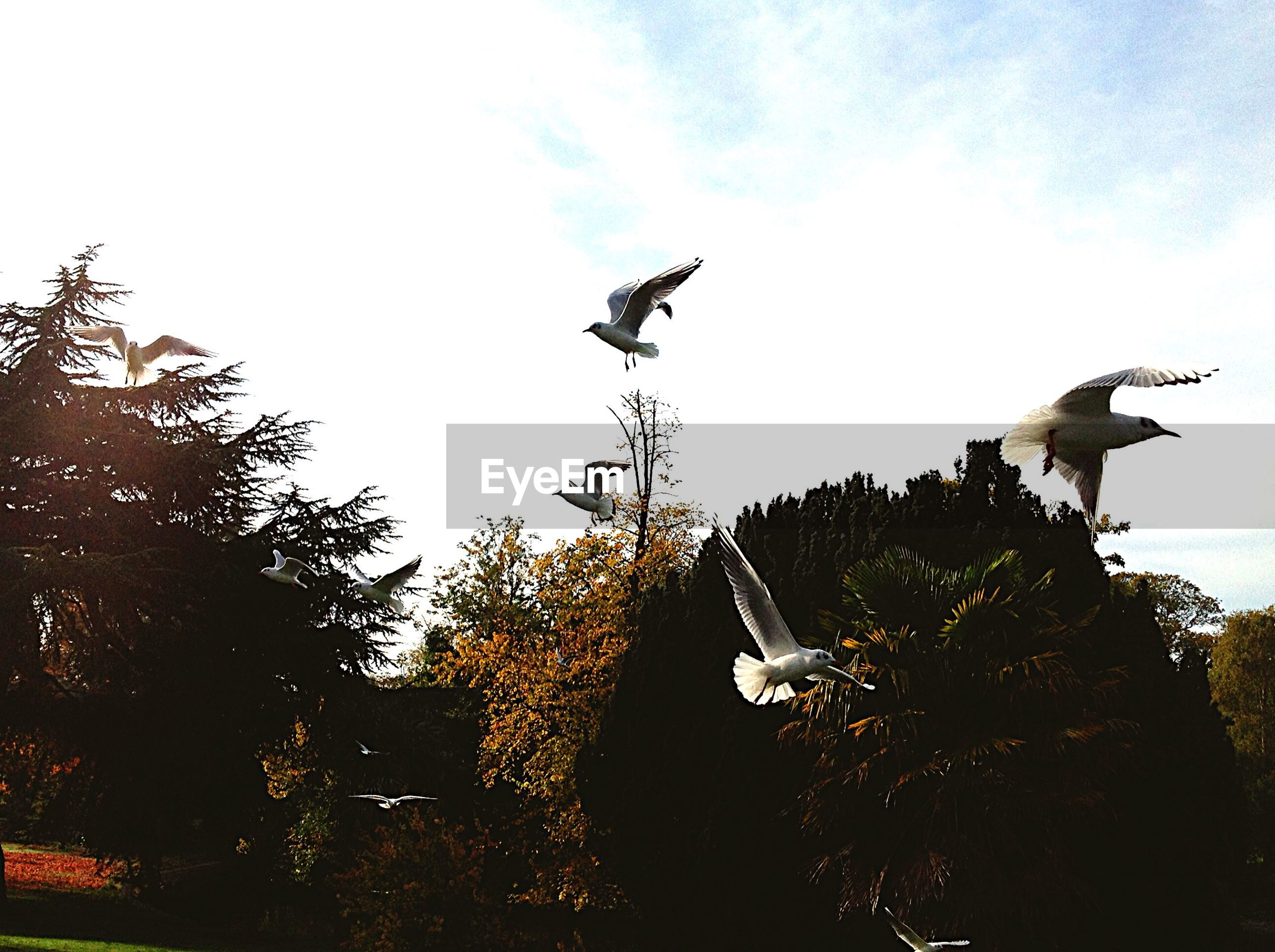 low angle view, flying, tree, bird, animal themes, animals in the wild, wildlife, mid-air, sky, one animal, spread wings, building exterior, built structure, clear sky, day, no people, architecture, outdoors, nature, two animals