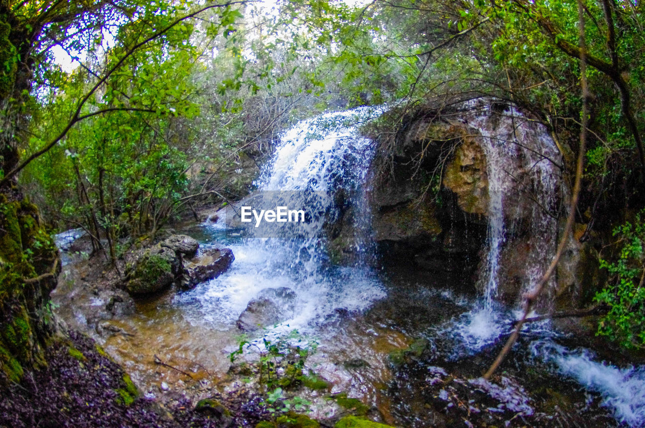 tree, plant, forest, land, beauty in nature, water, motion, nature, rock, no people, solid, rock - object, scenics - nature, day, flowing water, waterfall, non-urban scene, growth, outdoors, flowing, rainforest, stream - flowing water, power in nature