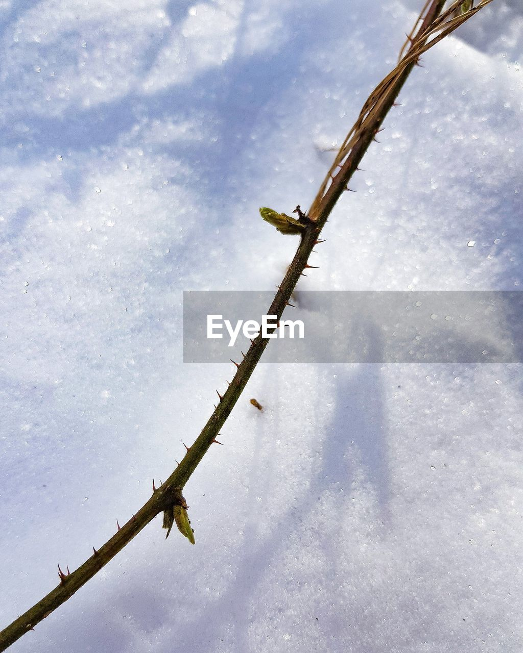 winter, cold temperature, day, outdoors, snow, weather, nature, low angle view, no people, sky, beauty in nature, water, close-up