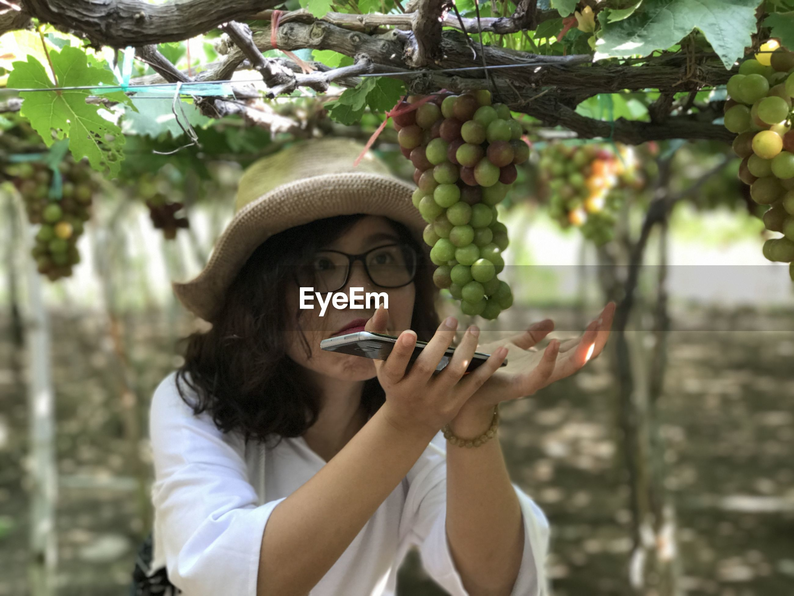 Close-up of woman with hands cupped below grapes growing in vineyard
