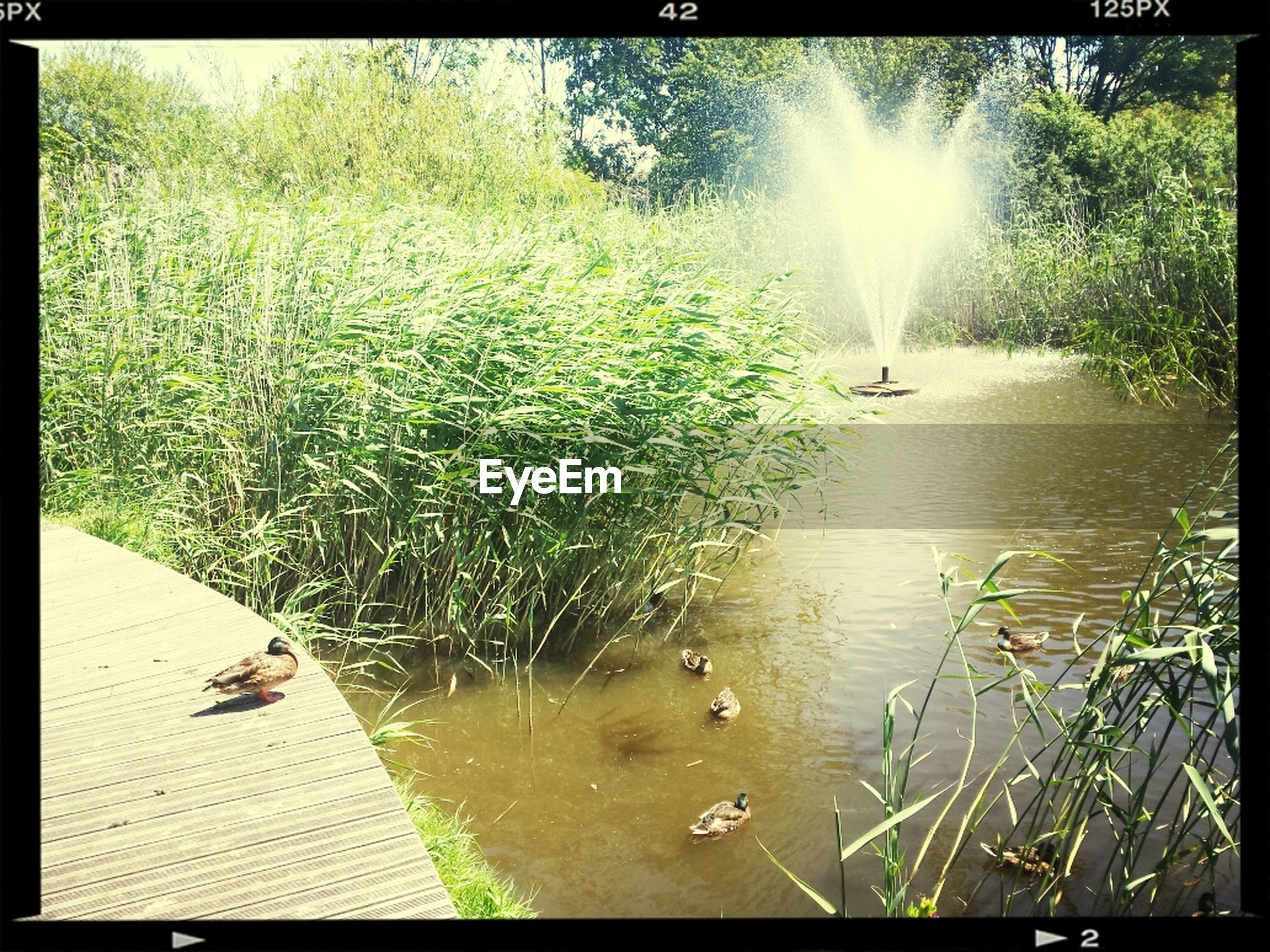 transfer print, water, auto post production filter, animal themes, reflection, sunlight, bird, sun, tree, lake, sunbeam, wildlife, nature, tranquility, animals in the wild, grass, plant, growth, green color, beauty in nature