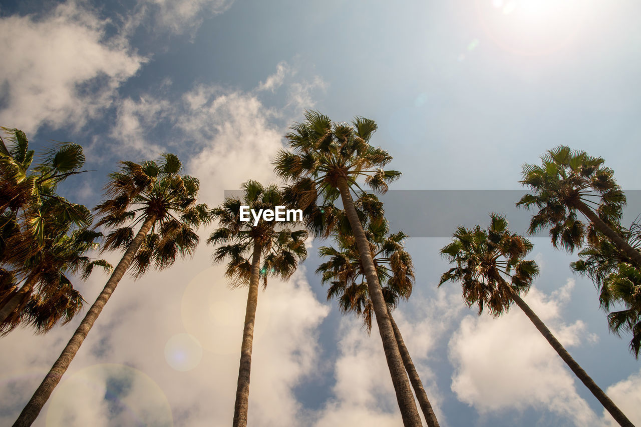 sky, tree, cloud - sky, plant, tropical climate, palm tree, low angle view, beauty in nature, growth, nature, tranquility, no people, sunlight, day, scenics - nature, trunk, tree trunk, tall - high, outdoors, tranquil scene, lens flare, coconut palm tree, tropical tree