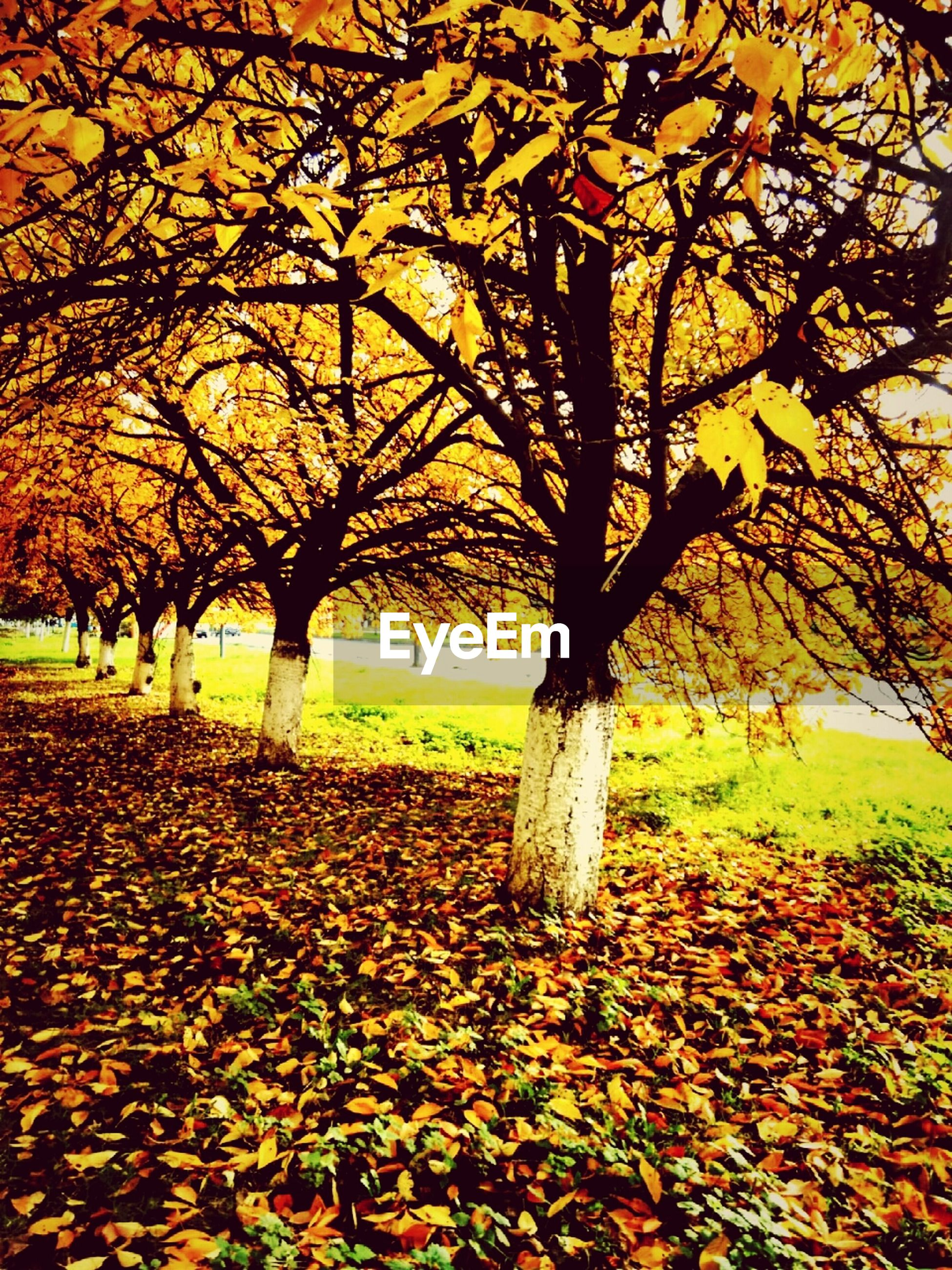 tree, autumn, change, season, tranquility, nature, park - man made space, leaf, beauty in nature, tranquil scene, branch, tree trunk, orange color, scenics, fallen, field, growth, grass, bare tree, landscape
