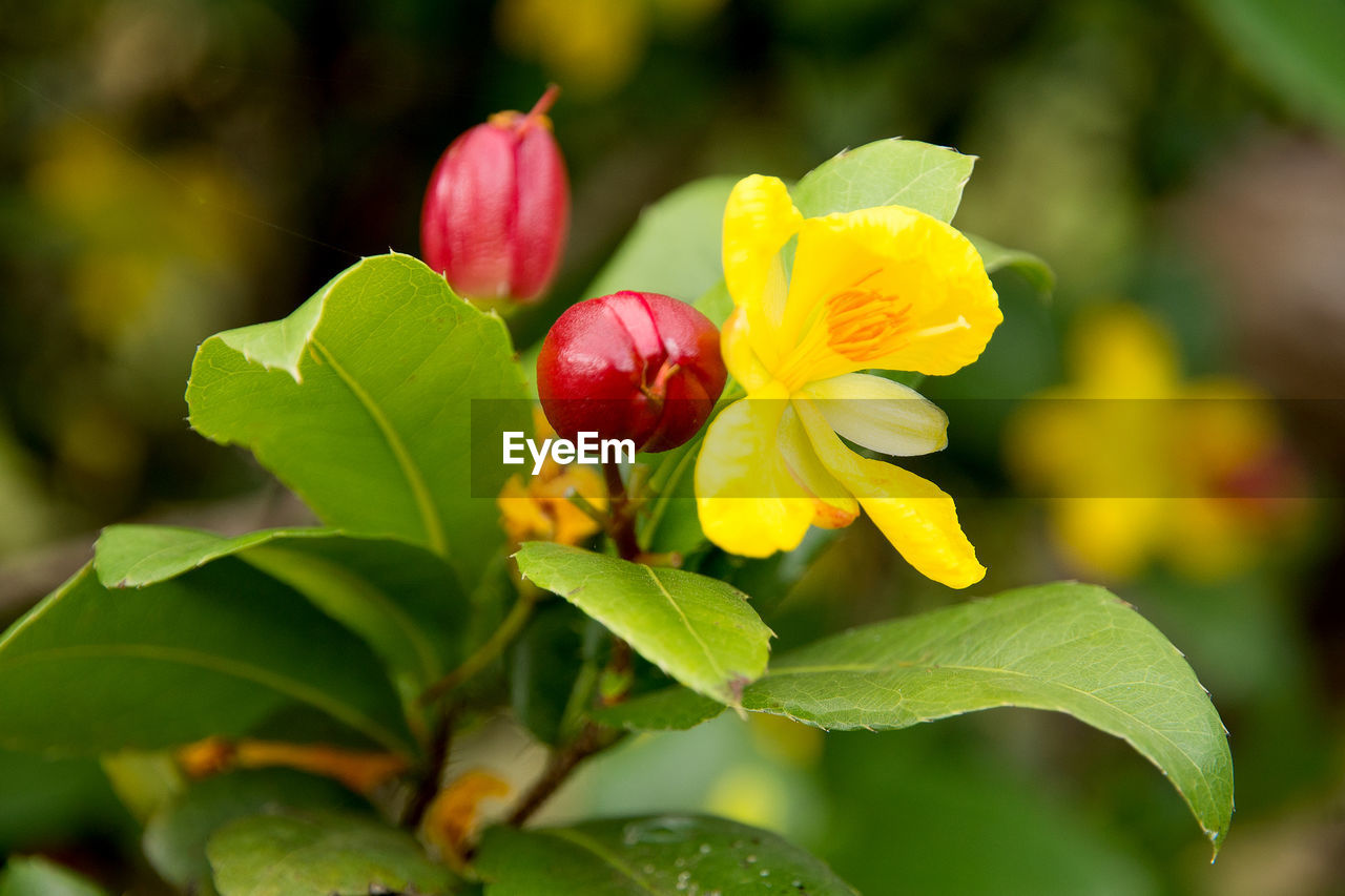 flower, freshness, growth, nature, leaf, plant, beauty in nature, petal, fragility, flower head, close-up, no people, outdoors, day, yellow, blooming