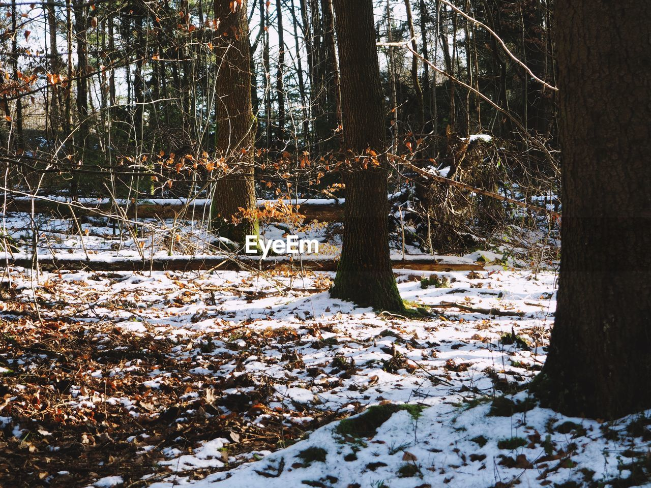 winter, nature, snow, tree, tranquility, forest, tree trunk, cold temperature, beauty in nature, tranquil scene, day, outdoors, scenics, no people, branch, growth, landscape, bleak