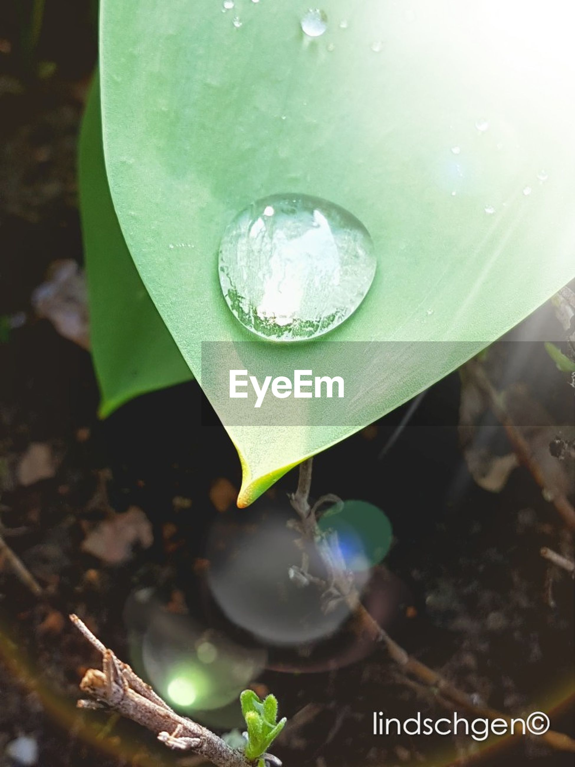 leaf, water, drop, nature, plant, growth, green color, freshness, fragility, close-up, high angle view, wet, beauty in nature, no people, purity, day, new life, floating on water, outdoors, lily pad, raindrop