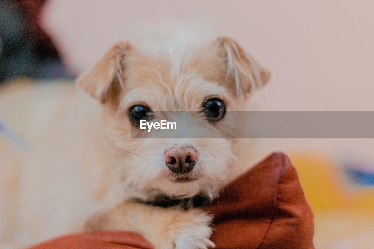 CLOSE-UP PORTRAIT OF PUPPY WITH EYES