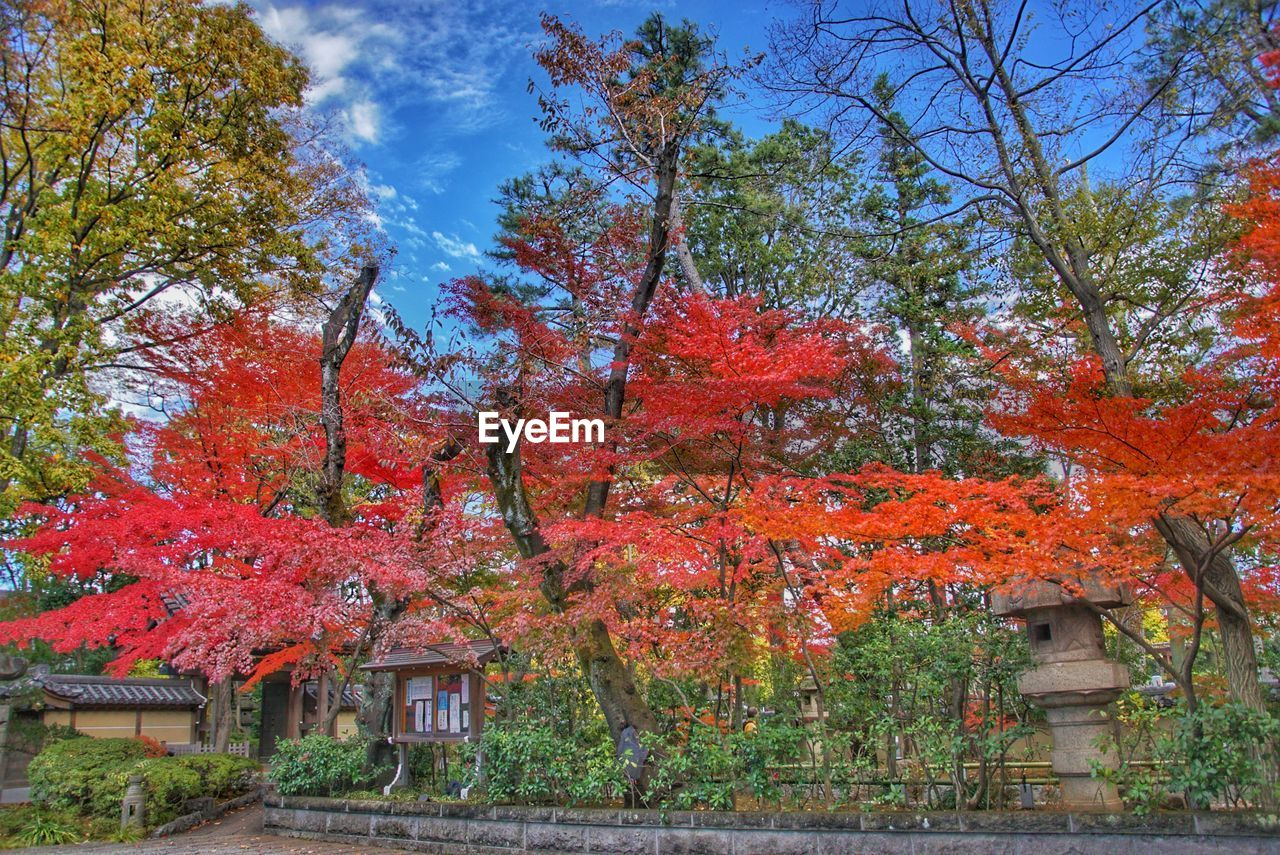autumn, tree, change, leaf, nature, beauty in nature, orange color, outdoors, growth, built structure, tranquility, maple tree, day, scenics, architecture, building exterior, no people, tranquil scene, maple leaf, branch, red, sky, travel destinations