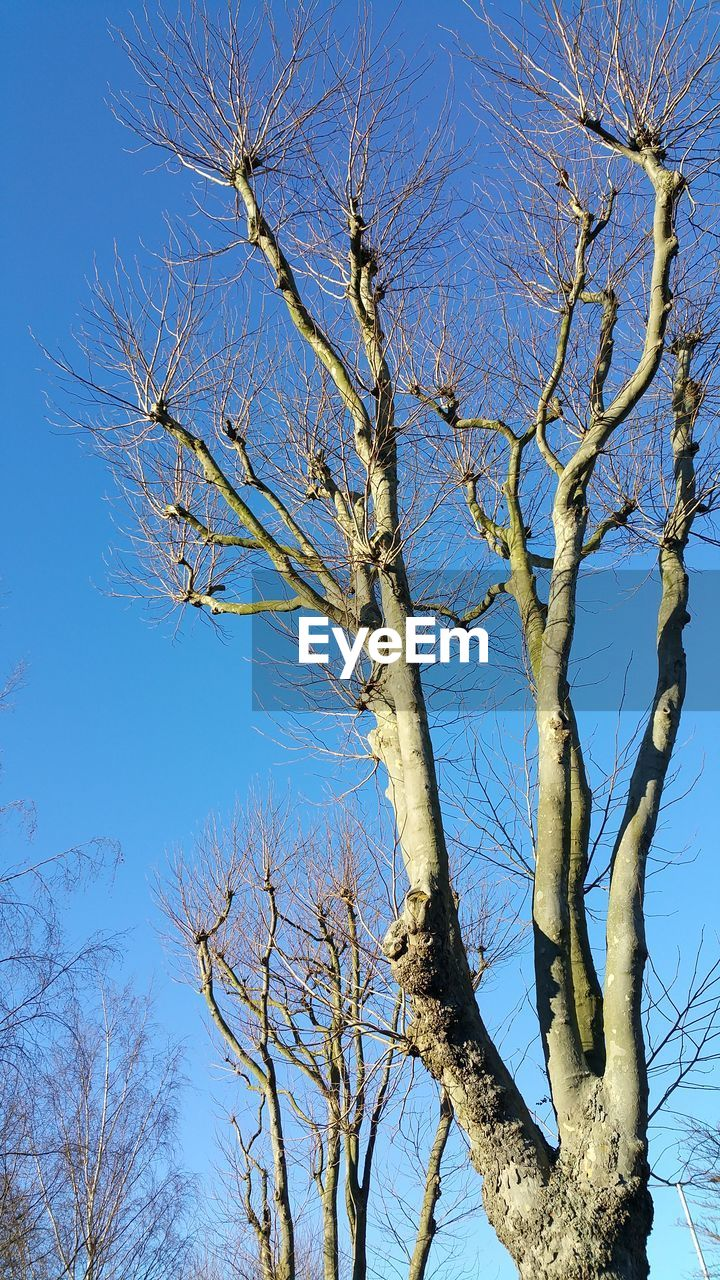 tree, bare tree, branch, low angle view, nature, day, no people, blue, outdoors, sky, clear sky, beauty in nature