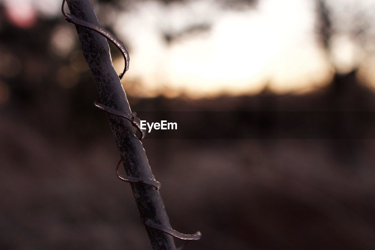 focus on foreground, outdoors, close-up, nature, dead plant, no people, dried plant, plant, day, winter, beauty in nature