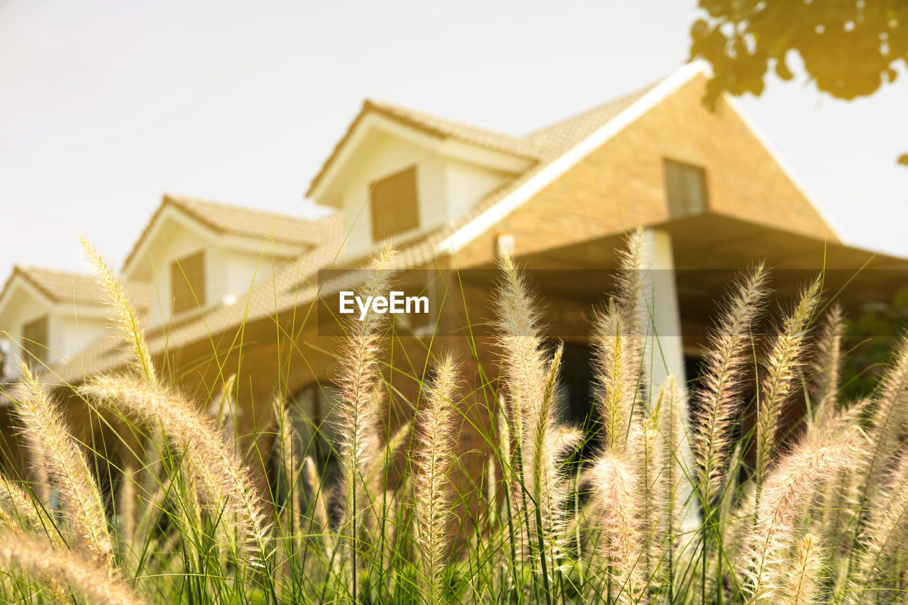 built structure, building exterior, architecture, sky, building, growth, nature, plant, day, no people, house, low angle view, clear sky, focus on foreground, outdoors, residential district, sunlight, crop, agriculture, close-up