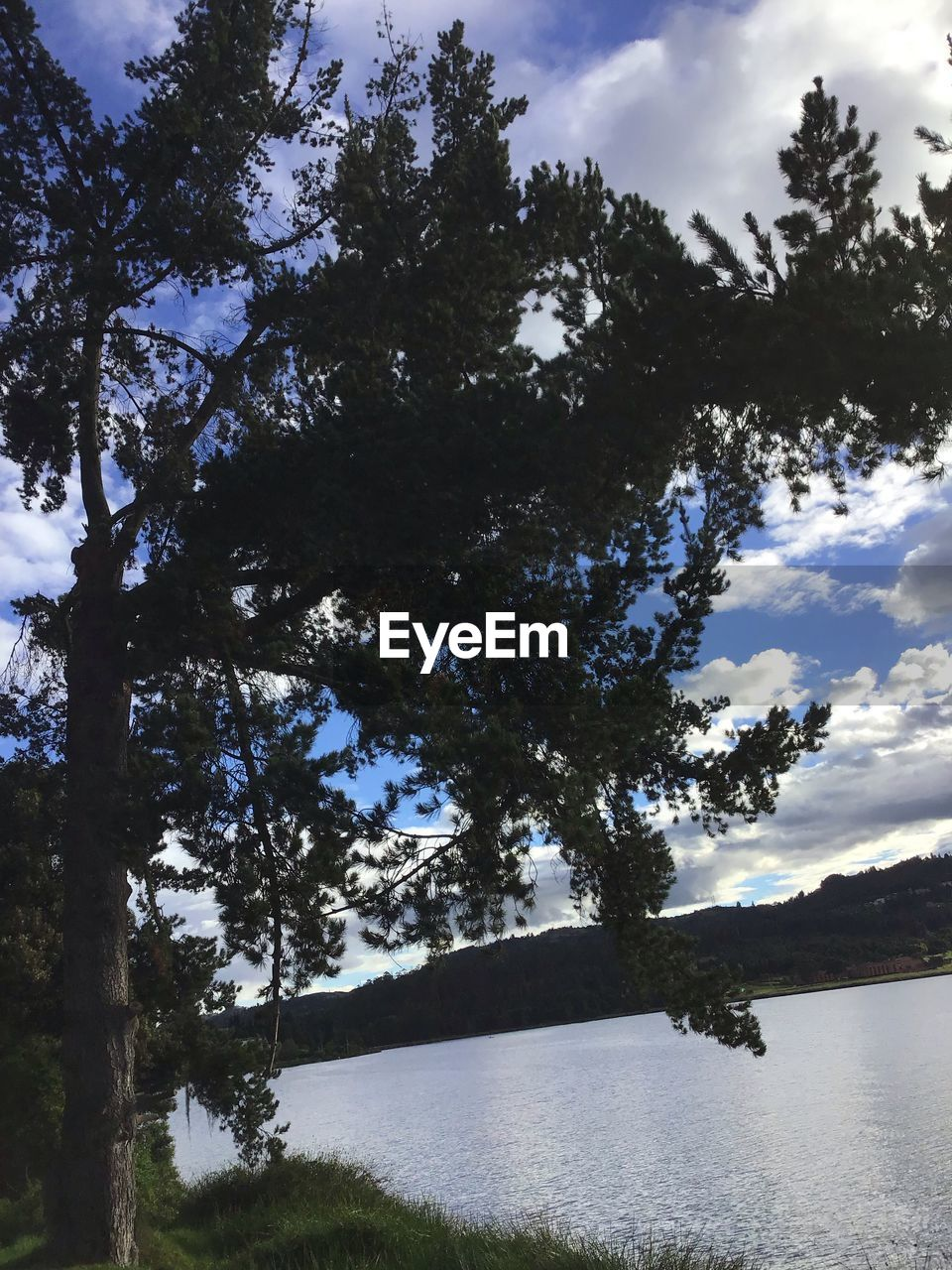 tree, plant, sky, water, cloud - sky, beauty in nature, tranquility, nature, lake, no people, day, tranquil scene, growth, scenics - nature, land, outdoors, forest, non-urban scene