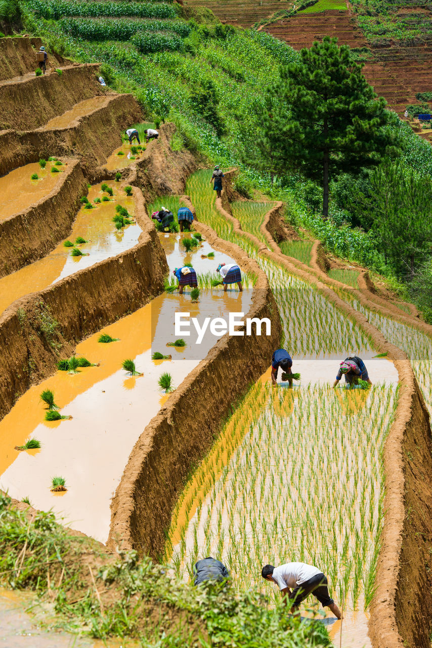 High Angle View Of Farmers Working On Terraced Field