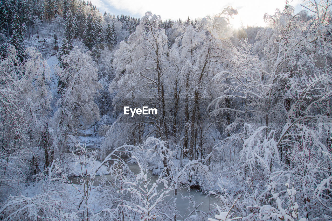 cold temperature, snow, winter, ice, nature, frozen, frost, pine tree, no people, forest, outdoors, tree, bare tree, day, beauty in nature