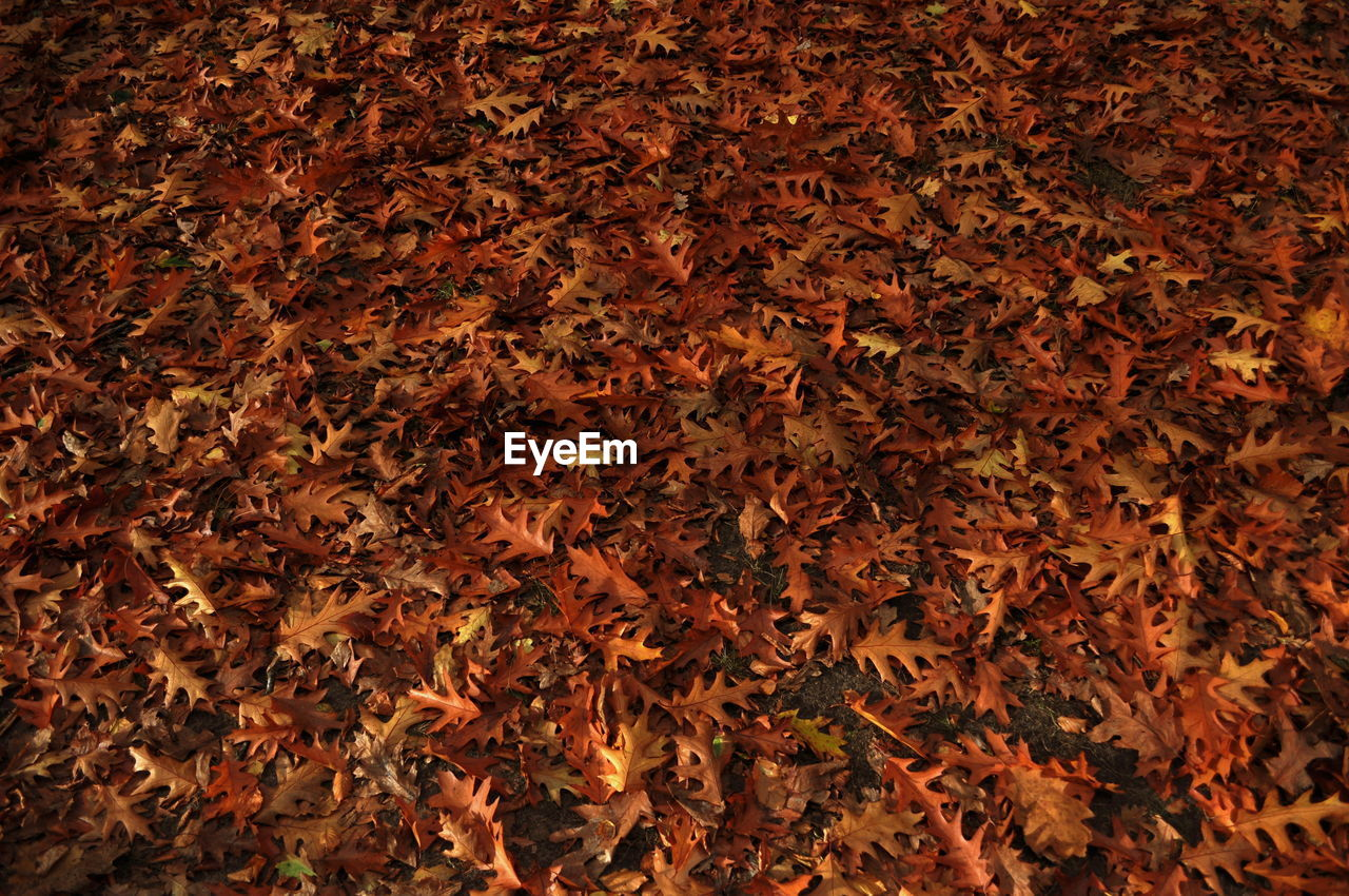 High Angle View Of Fallen Leaves On Field