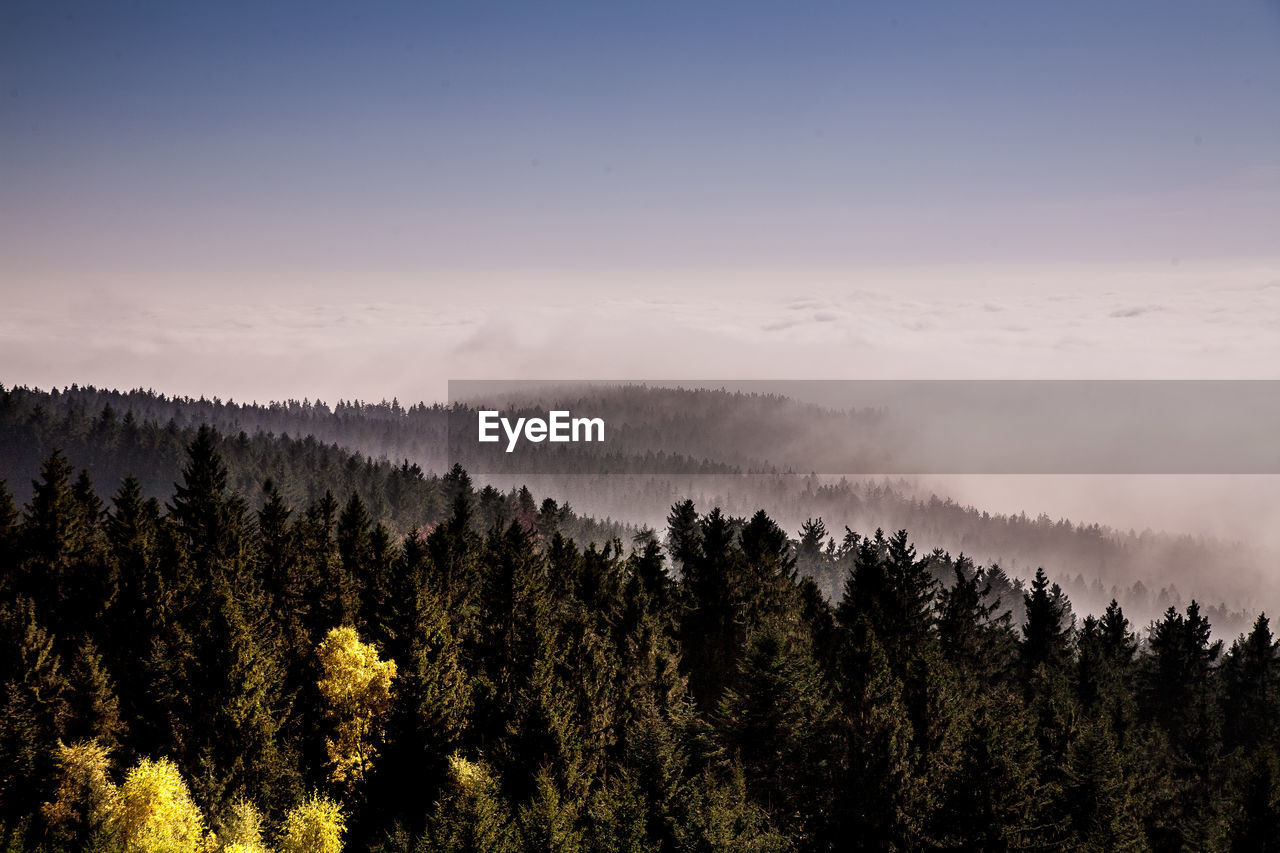 tree, beauty in nature, scenics - nature, plant, tranquil scene, tranquility, sky, growth, non-urban scene, no people, forest, nature, idyllic, land, fog, remote, environment, outdoors, landscape, woodland, coniferous tree