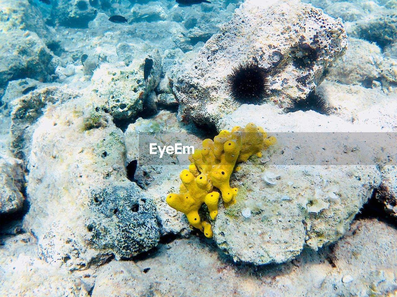 sea, animals in the wild, water, underwater, undersea, sea life, animal wildlife, animal themes, animal, invertebrate, marine, nature, beauty in nature, yellow, rock, no people, coral, solid, rock - object, outdoors