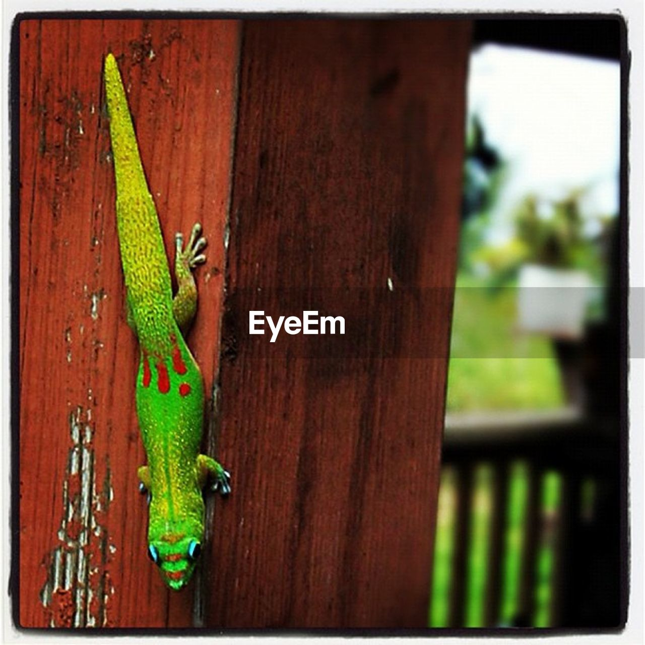 green color, focus on foreground, day, no people, reptile, outdoors, animal themes, close-up, animals in the wild, one animal, nature