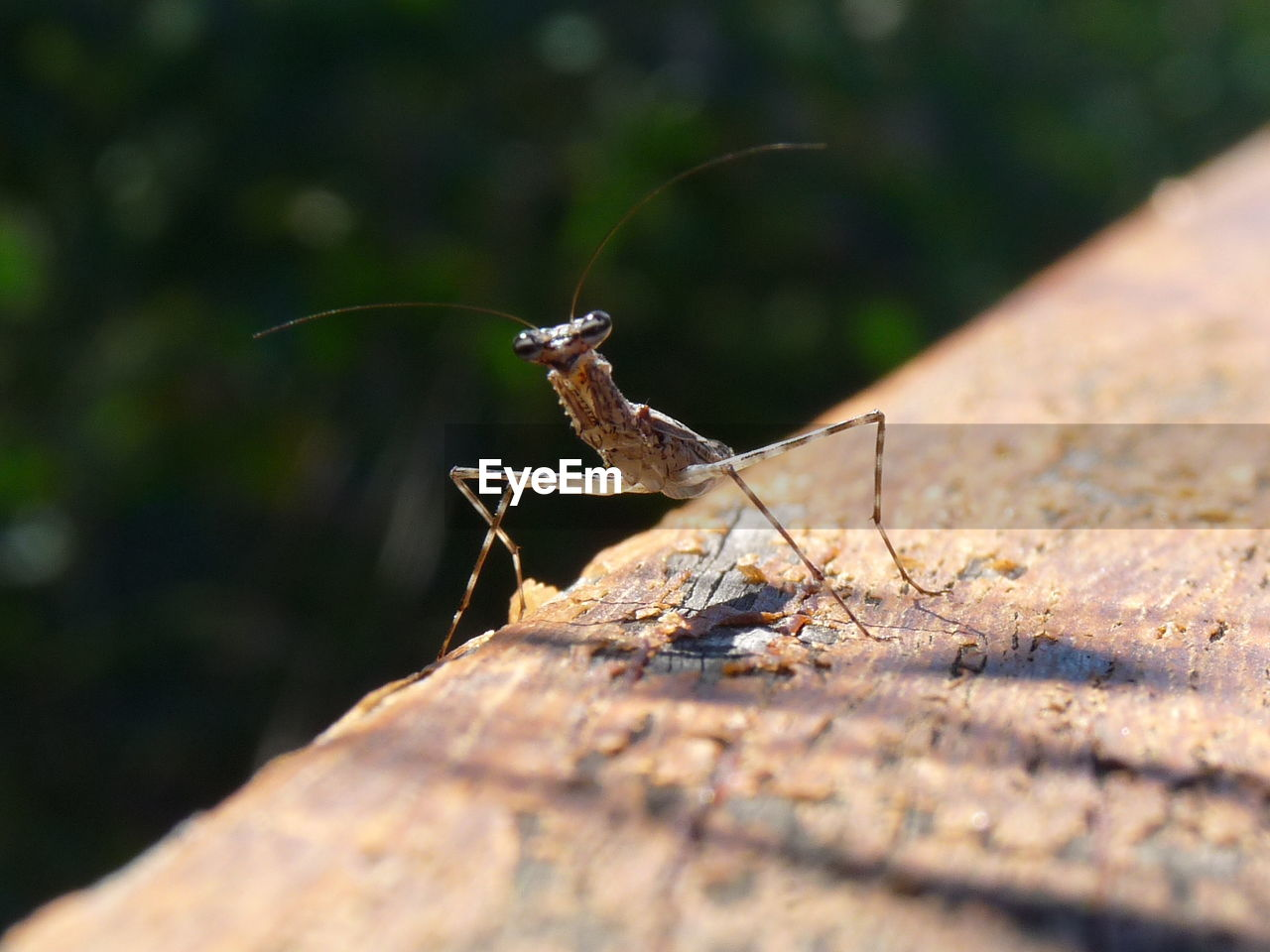 selective focus, invertebrate, one animal, animal wildlife, nature, animals in the wild, insect, individuality, people, wild, vitality, environment, outdoors, opportunity, freedom, day, sunlight, small
