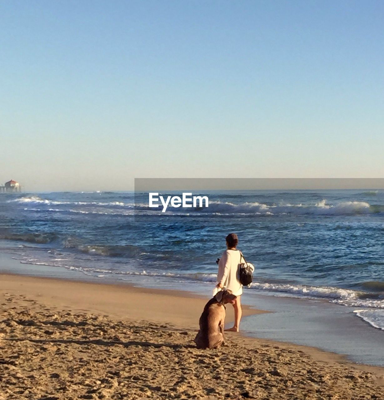 Rear view of a woman and dog standing on beach