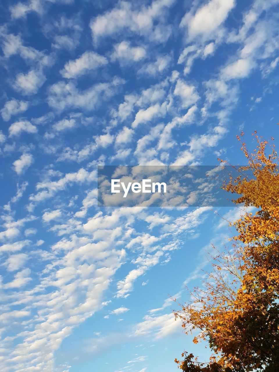 cloud - sky, sky, low angle view, beauty in nature, nature, no people, tree, tranquility, plant, day, scenics - nature, tranquil scene, outdoors, growth, blue, change, autumn, branch, sunlight, idyllic
