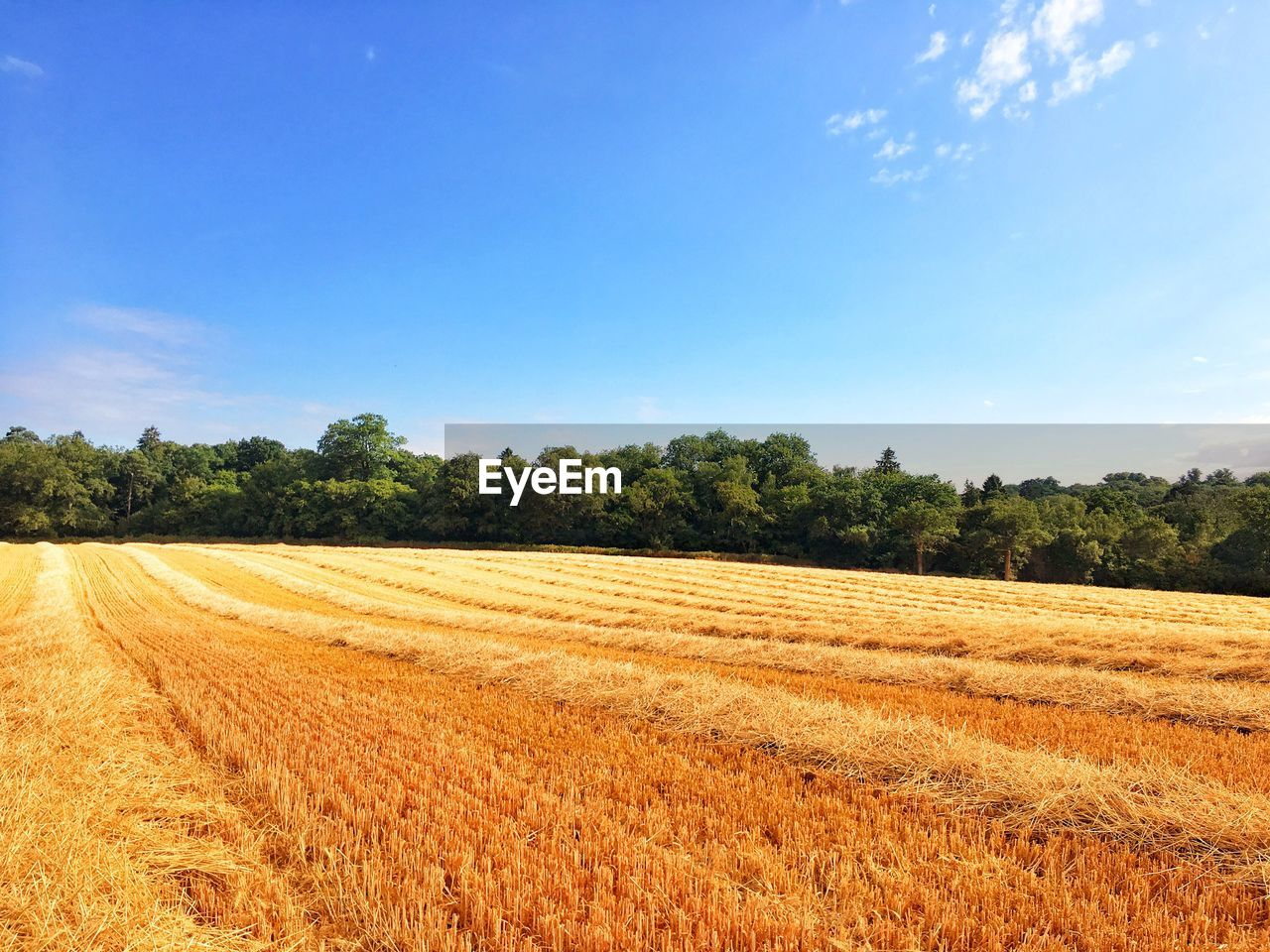 plant, landscape, field, sky, tranquil scene, land, tree, environment, agriculture, tranquility, rural scene, growth, beauty in nature, scenics - nature, nature, day, no people, farm, sunlight, blue, outdoors, plantation