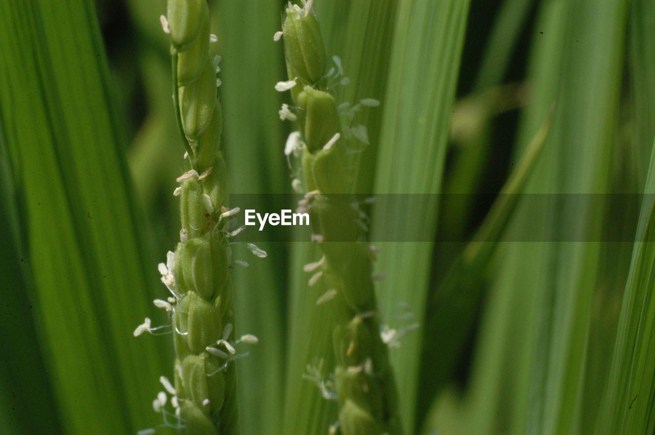 Detail shot of green plants