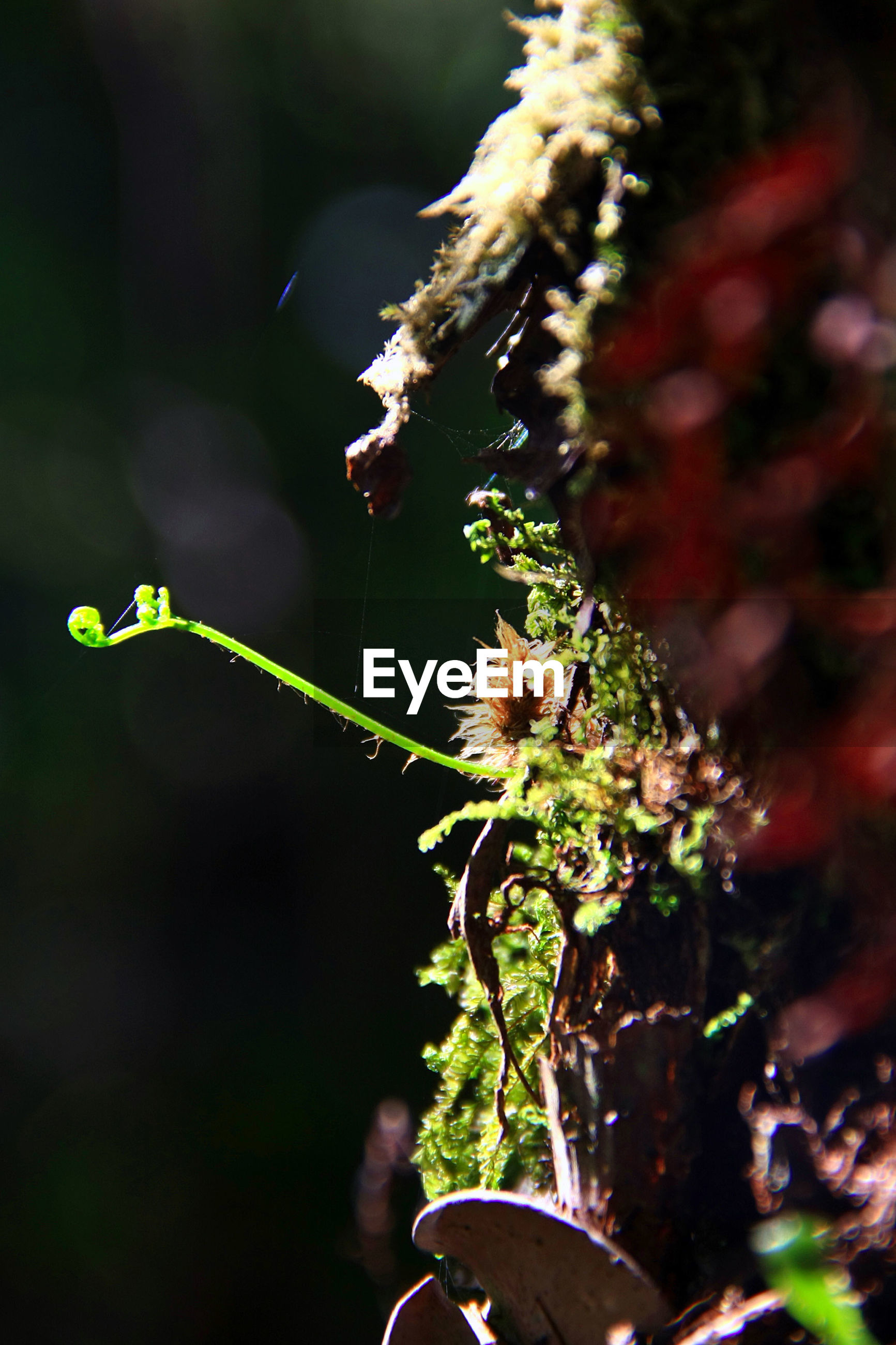 growth, plant, nature, flower, fragility, beauty in nature, close-up, green color, no people, day, freshness, outdoors, flower head
