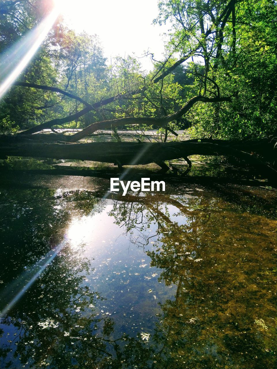 water, tree, reflection, plant, tranquility, beauty in nature, lake, nature, tranquil scene, no people, growth, forest, sky, day, scenics - nature, sunlight, land, outdoors, non-urban scene, lens flare