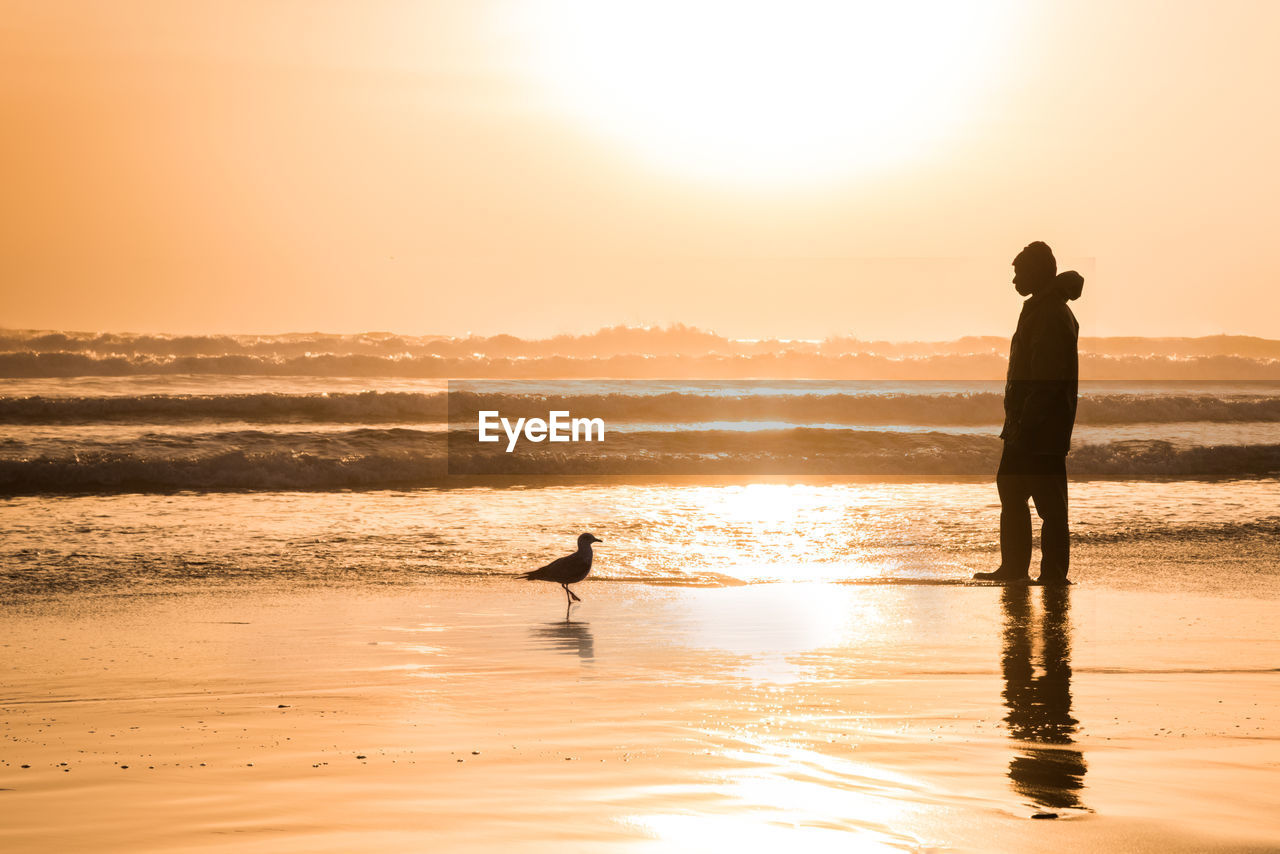 water, sky, sunset, silhouette, sea, beauty in nature, men, real people, scenics - nature, land, beach, orange color, lifestyles, leisure activity, reflection, nature, standing, people, horizon, horizon over water, sun, outdoors