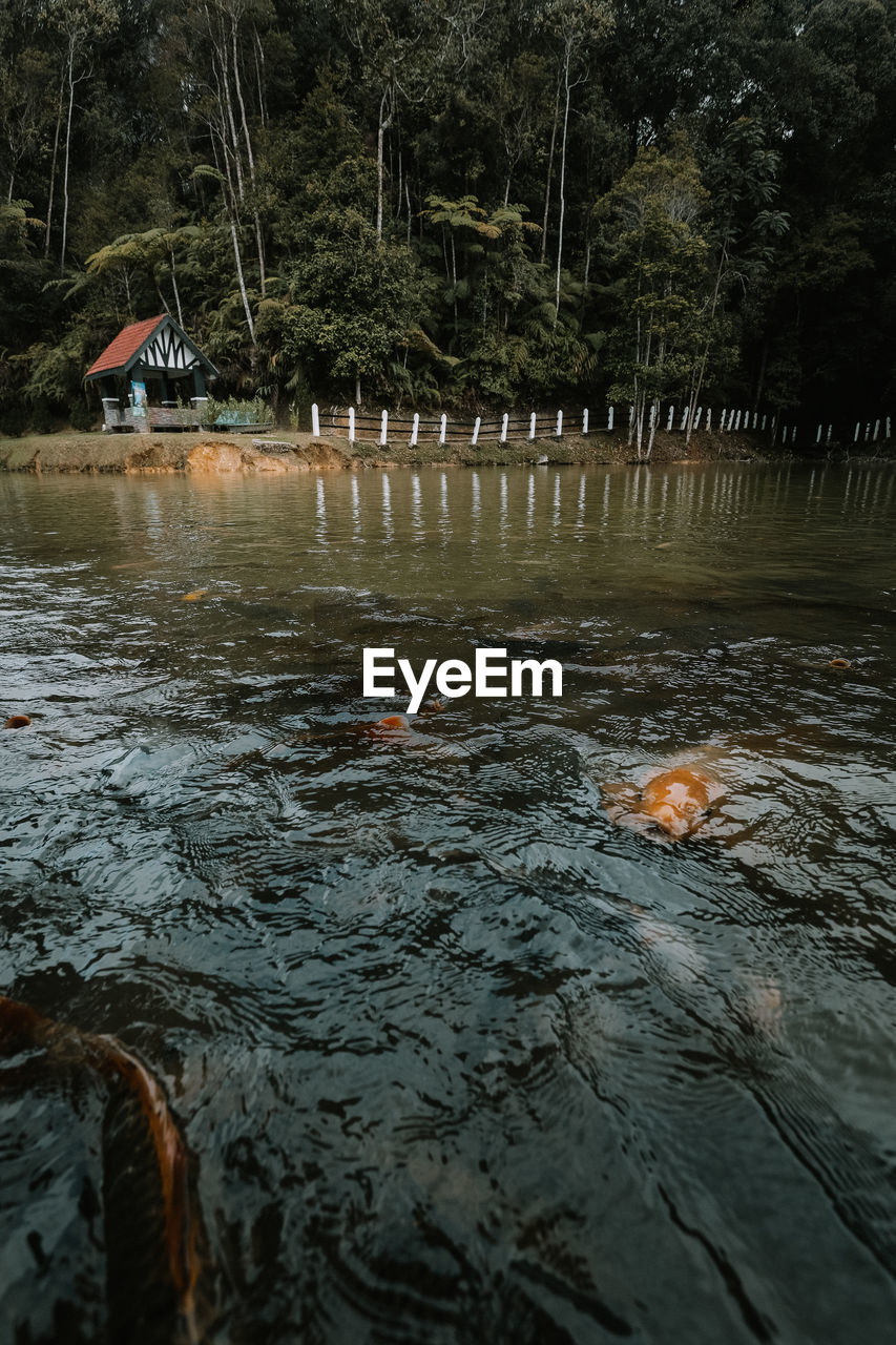 water, waterfront, nature, swimming, tree, lake, vertebrate, animal, group of animals, day, plant, fish, animal themes, outdoors, no people, rippled, animal wildlife, animals in the wild, flowing water