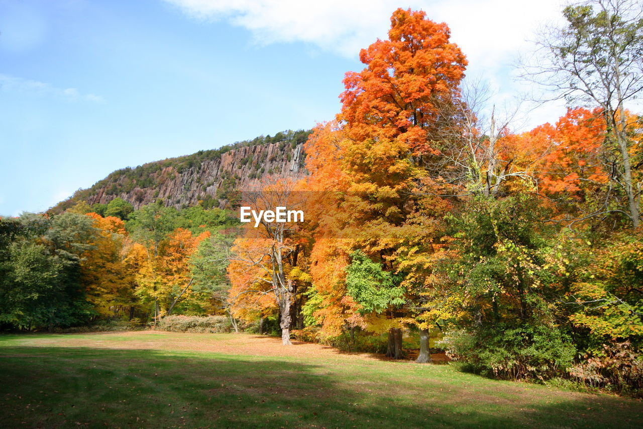 Trees On Field Against Mountains During Autumn