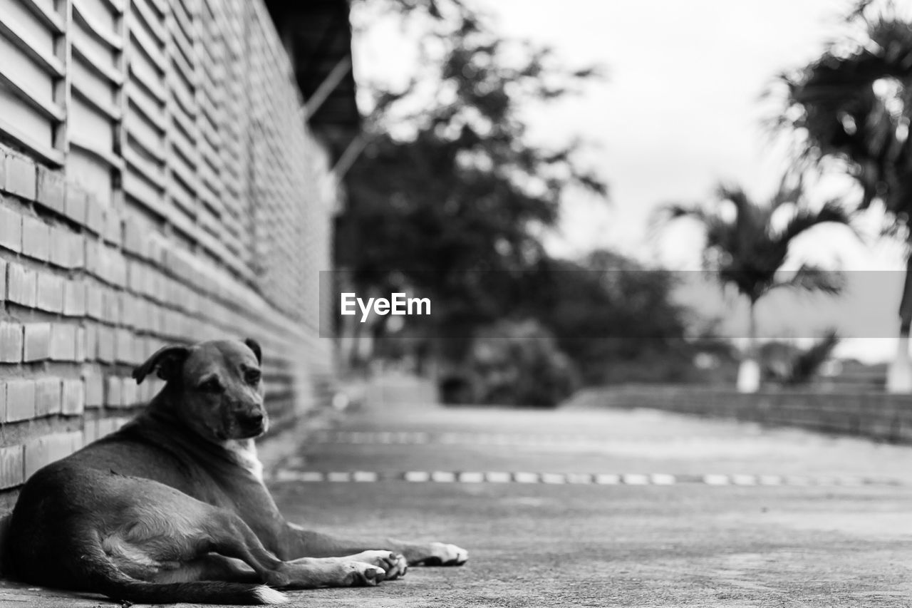 one animal, pets, animal themes, dog, domestic, canine, mammal, domestic animals, animal, vertebrate, focus on foreground, relaxation, wall, footpath, sitting, day, city, no people, architecture, selective focus