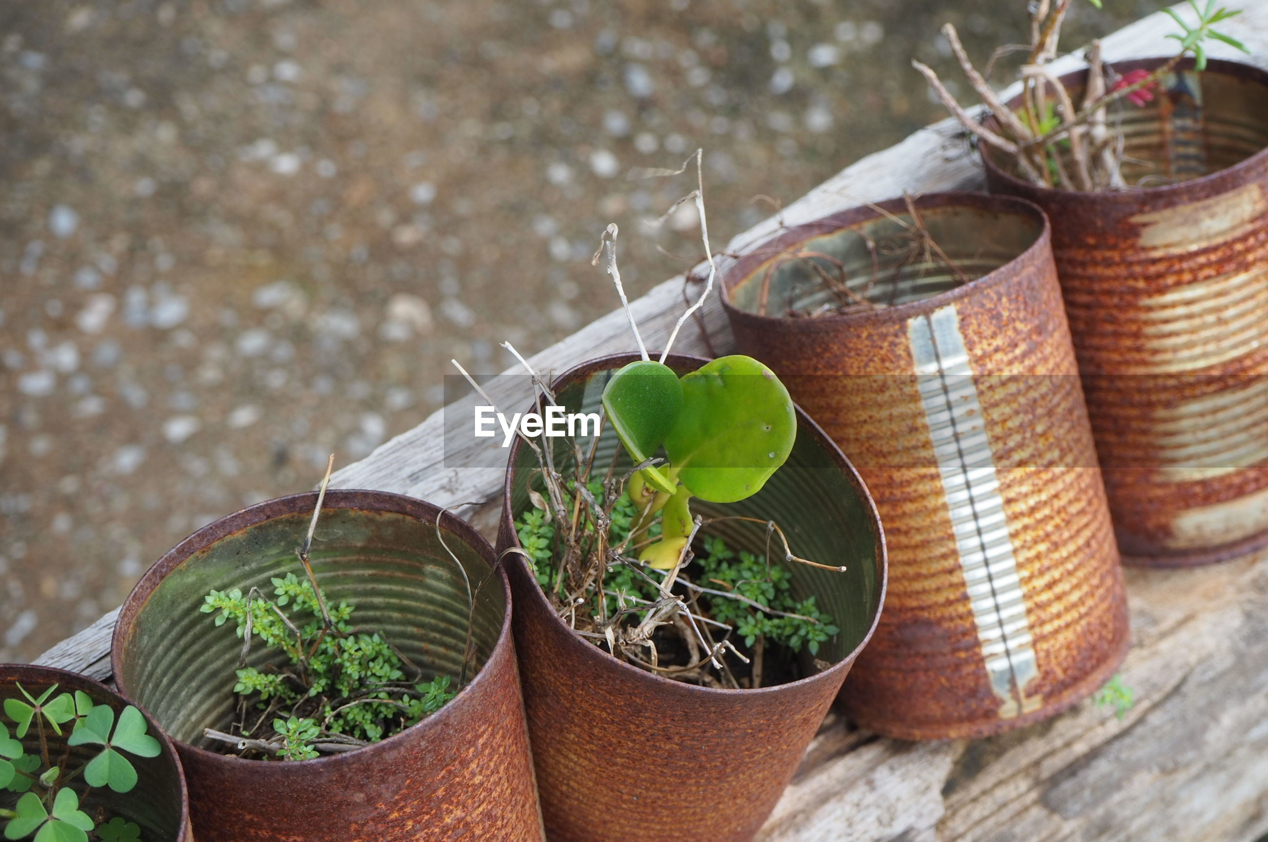 CLOSE-UP OF POTTED PLANT IN CONTAINER