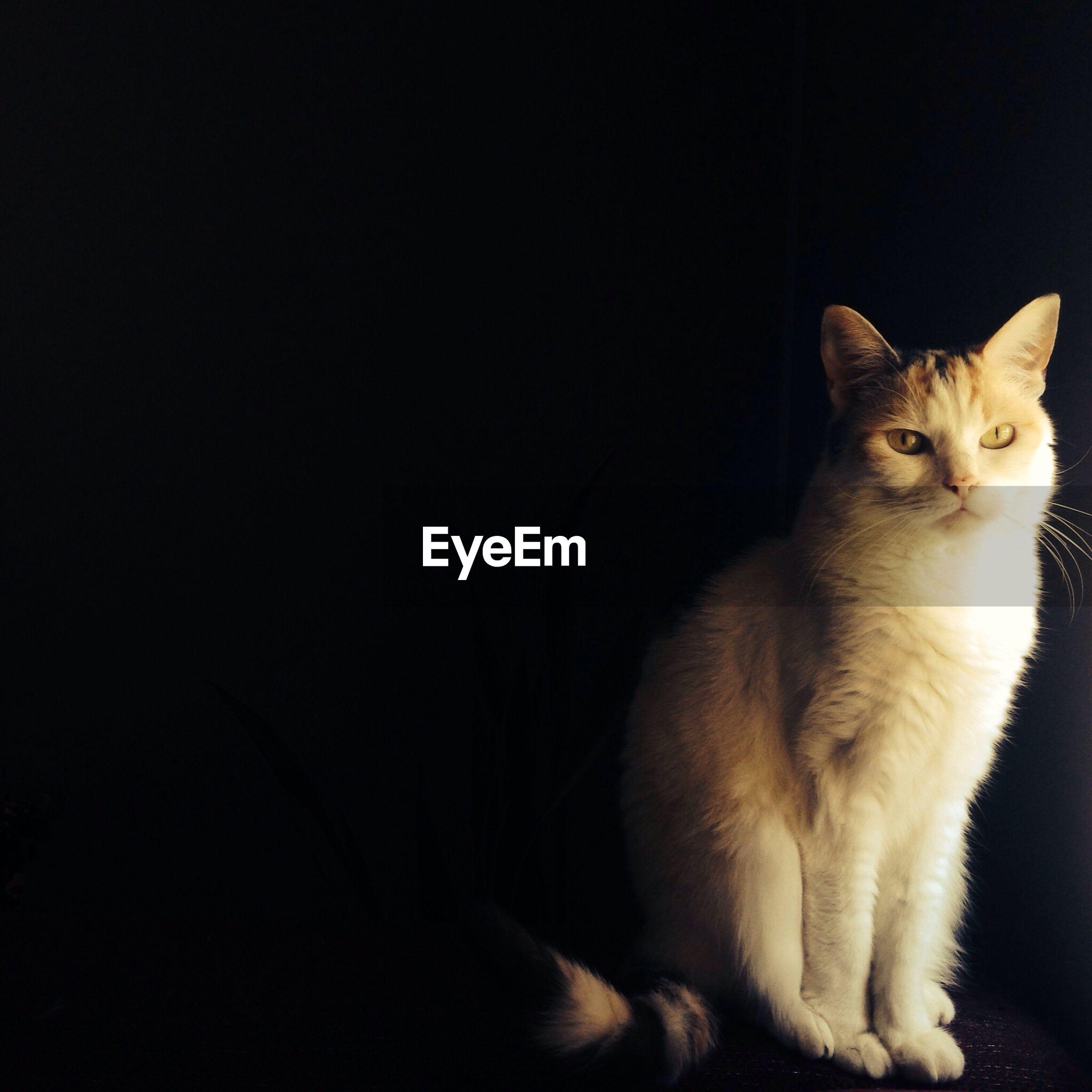 Full length portrait of cat sitting against black background