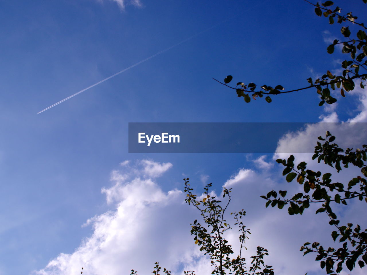 low angle view, sky, cloud - sky, nature, tree, day, beauty in nature, no people, outdoors, animals in the wild, animal themes, vapor trail, blue, flying, bird, contrail, branch