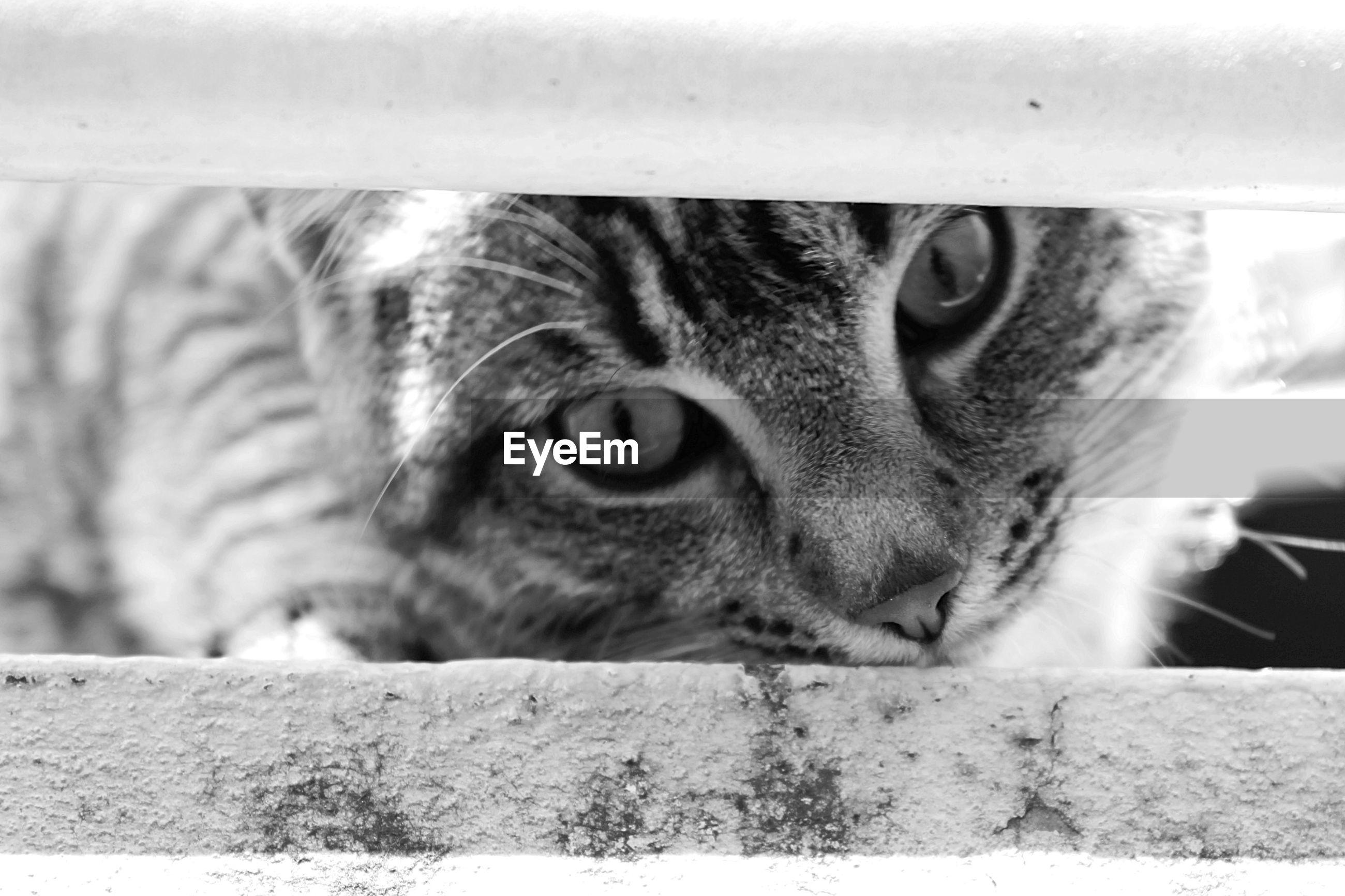 Portrait of cat outdoors