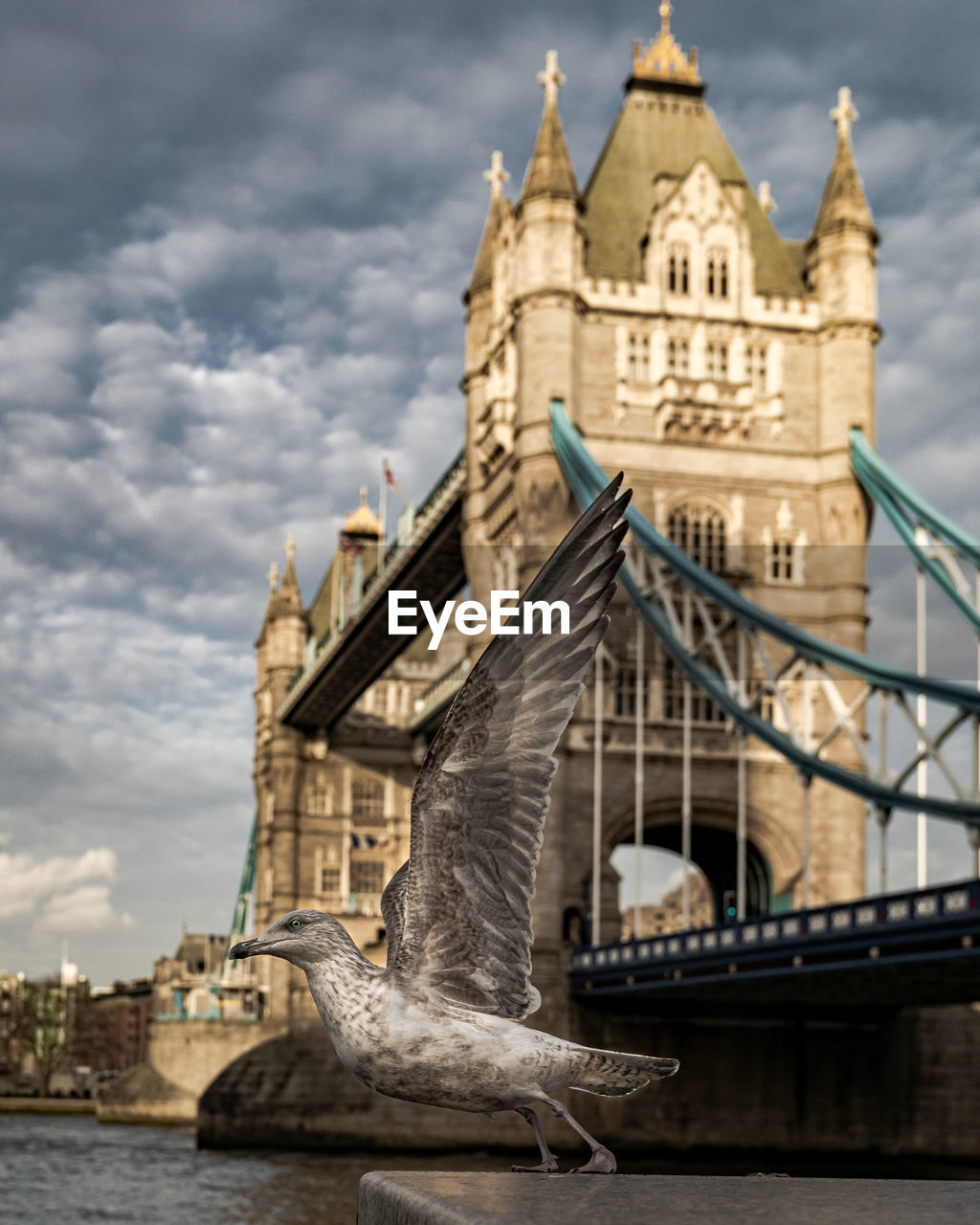 View of seagull taking of in front of tower bridge and blue sky with clouds