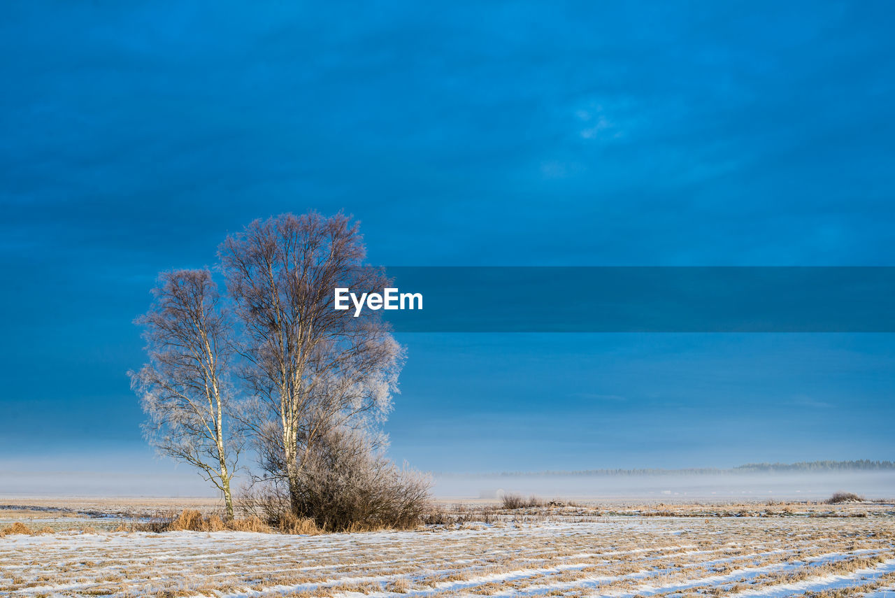 Bare Tree On Snowy Landscape Against Blue Sky
