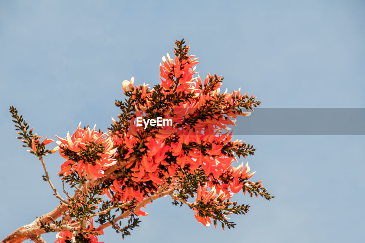 LOW ANGLE VIEW OF FLOWERING TREE AGAINST SKY